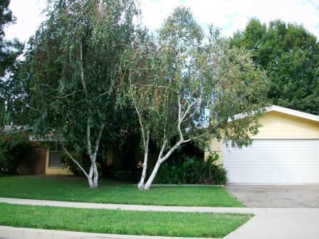 Chatsworth CA